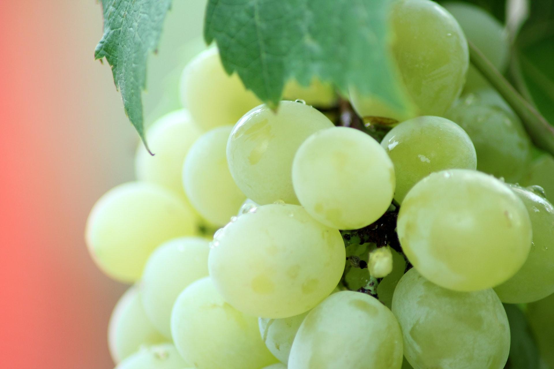 Comment Préparer Le Sol D'une Plantation De La Vigne ?