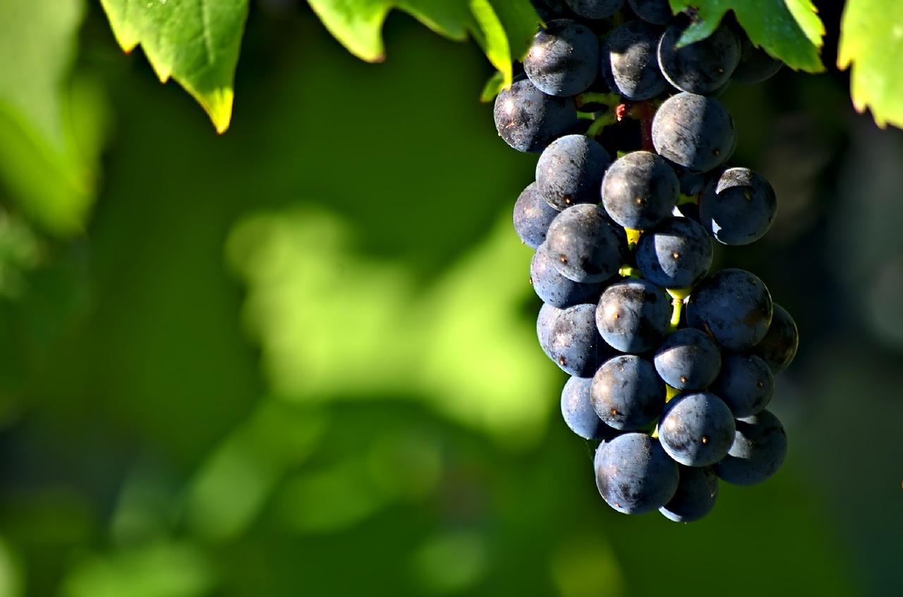 Quelques Racines Du Vin Naturel